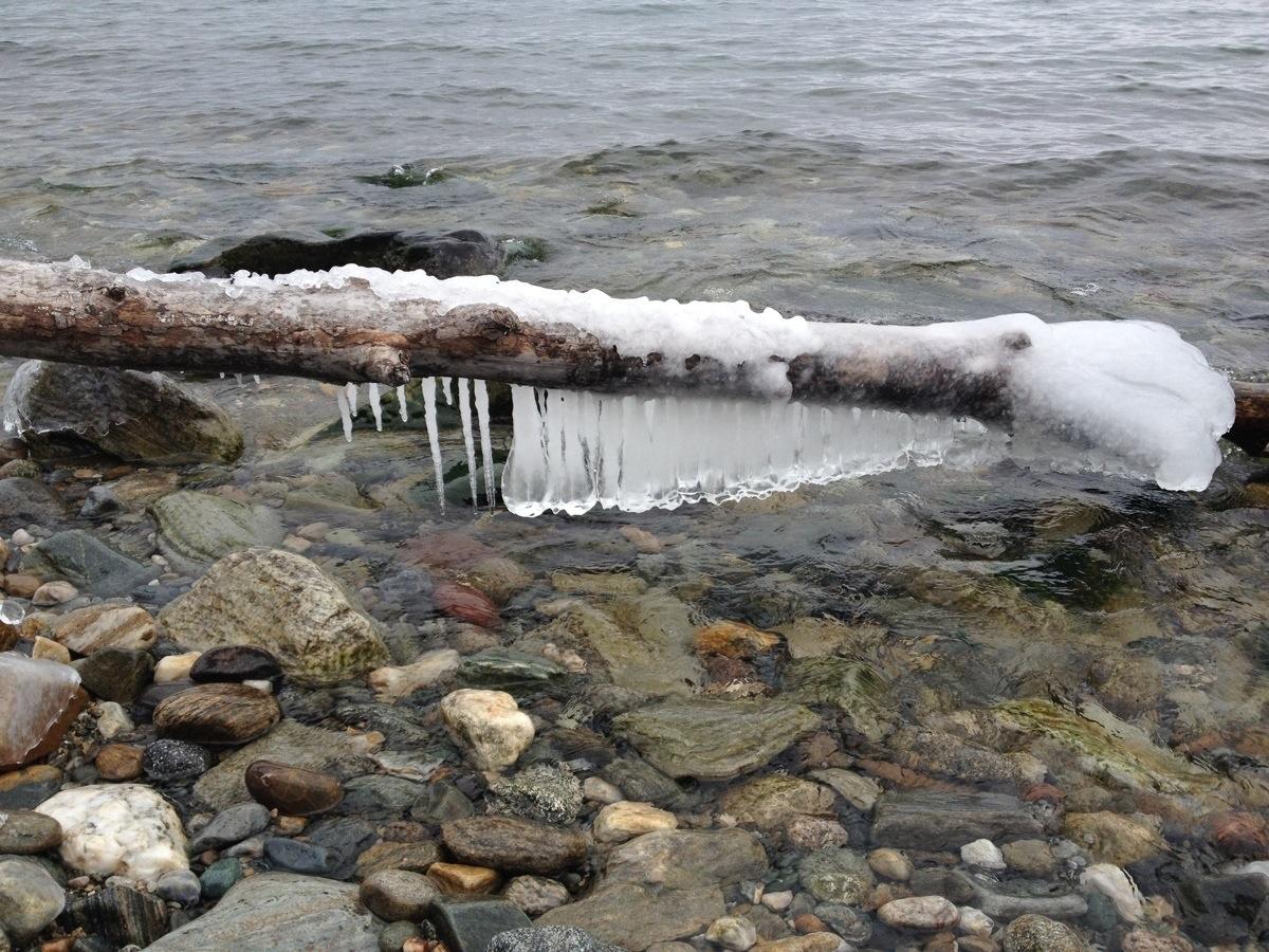 Bevroren Hout in meer